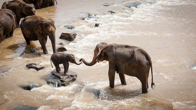 Elephant grandmas