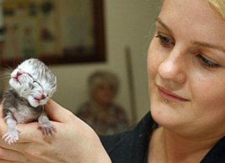 Two-Headed Kitten