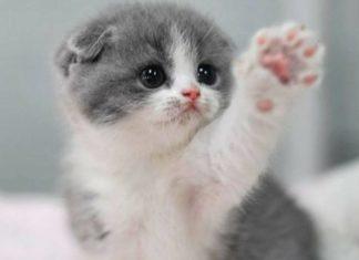 Self-Grooming Kitten