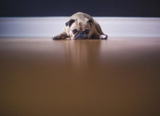 This Is How To Identify Separation Anxiety In Your Dog